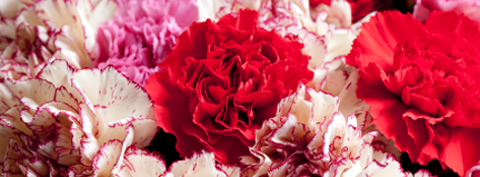 Carnations on Mothers Day 2019
