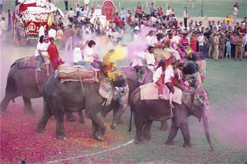 Jaipur Elephant Festival Holi