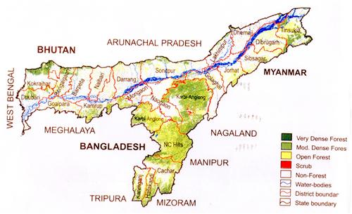 Assam  Forest 