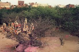 Shri krishna sweets in bangalore dating 8