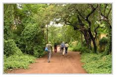 A view of the Guindy National Park in Chennai
