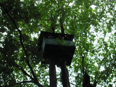 Tree house in Canacona